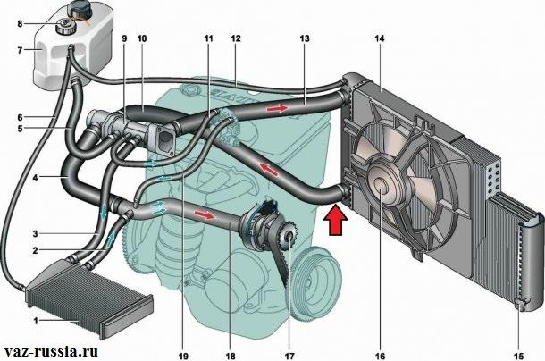 Нижний патрубок подсоединённый к радиатору